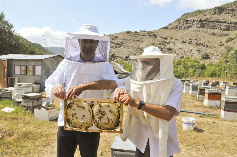 arı bakımı yapma, arı bakımı nasıl yapılır, arıcılık ve arı bakımı