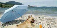 köpekler ve güneş ışığı, güneş ışığına duyulan ihtiyaç, köpekler güneş görmeli mi